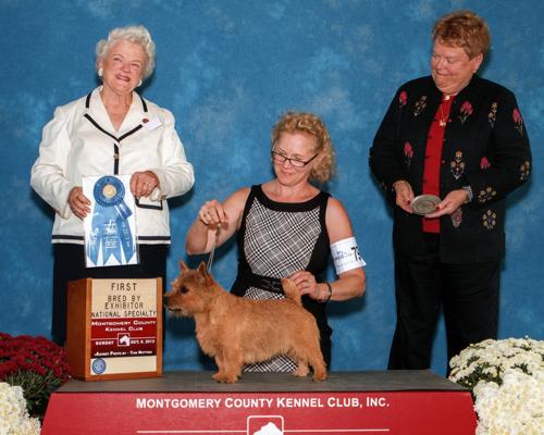 BERIC-Norwich Terriers
