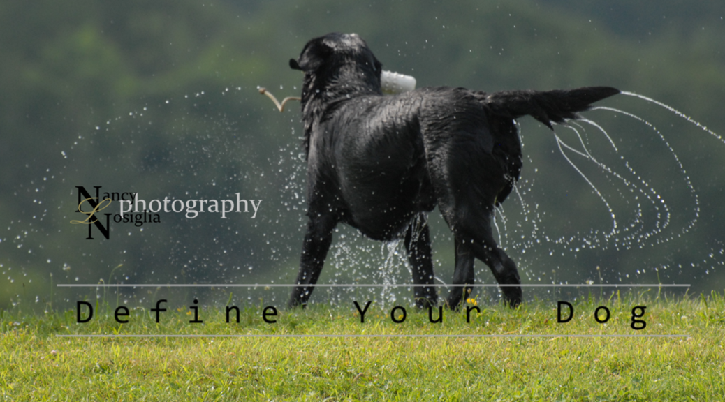 Nancy-Nosiglia-Photography-Define-Your-Dog