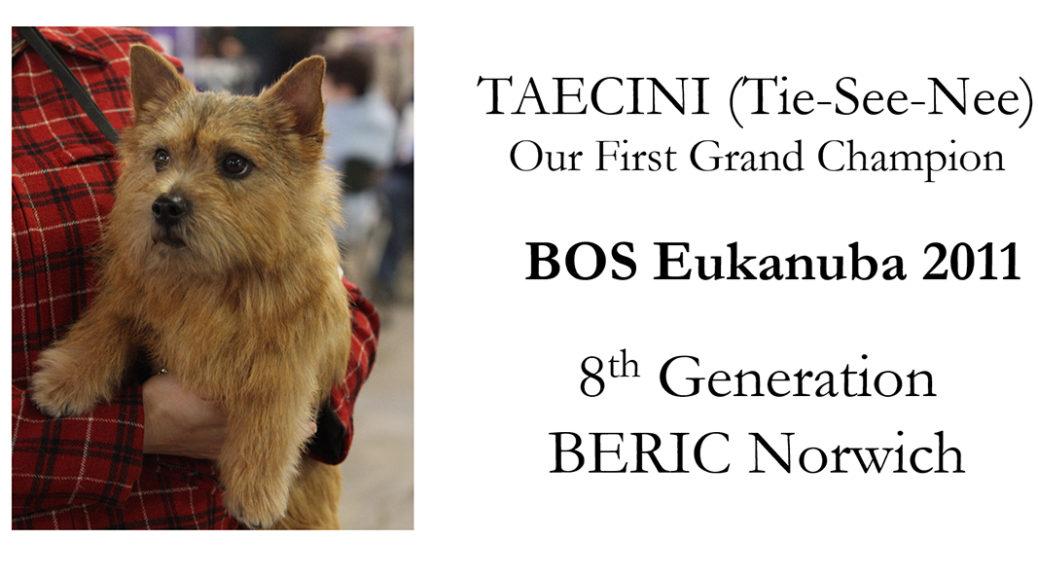 GCH BERIC Taecini