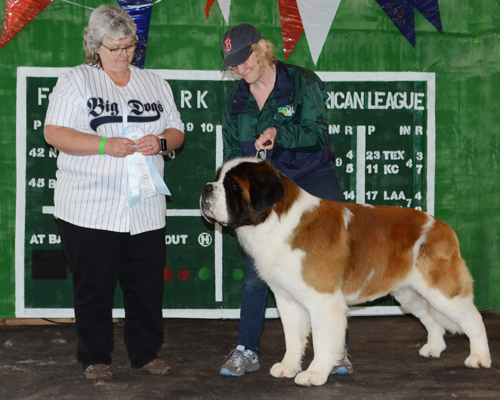 grand-slam-nesbc-saint-bernard-beric-sweet-retreat